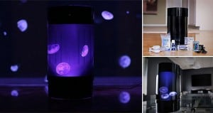 Pet Jellyfish Art Home