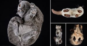 Photos Cats Taken Underneath Andrius Burba