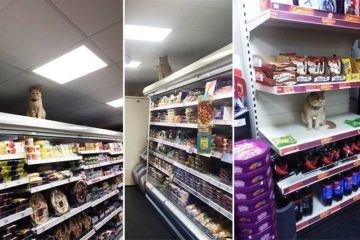 Shoppers In London Stalked By Cat