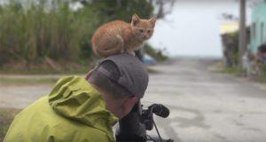 Stray Kitten Wildlife Photographer Mitsuaki Iwago