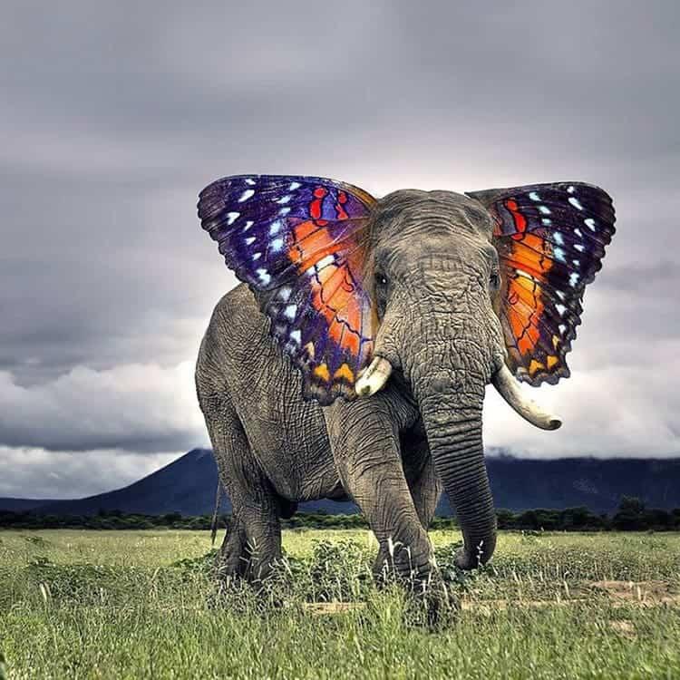 animal-hybrids-butterphant