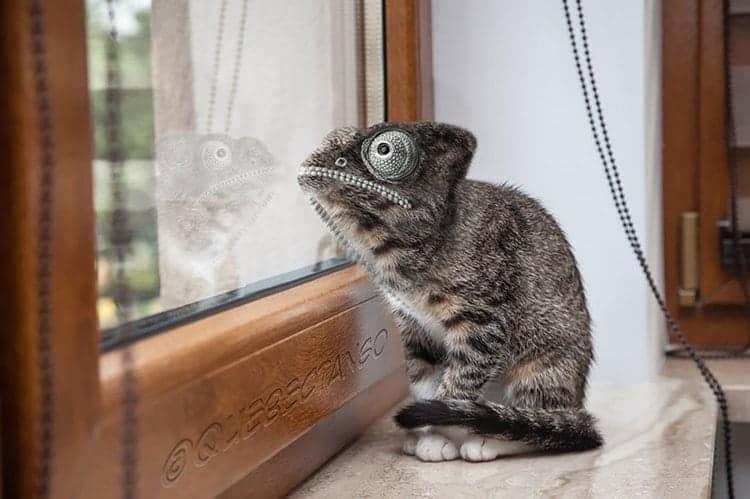 animal-hybrids-catmeleon