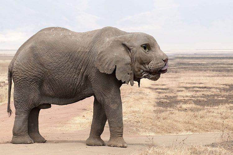 animal-hybrids-celephant