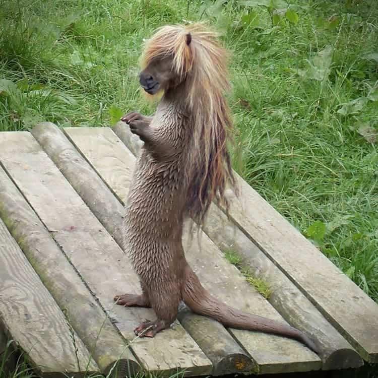 animal-hybrids-hairy-potter