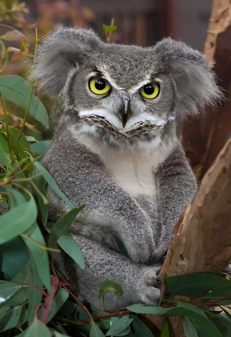 animal-hybrids-koaowl