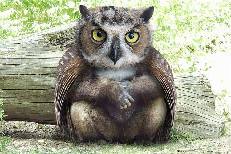 animal-hybrids-owlrilla