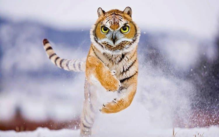 animal-hybrids-towl