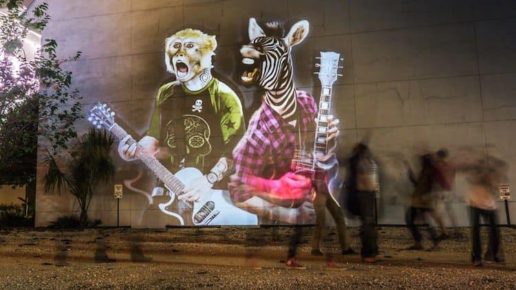 animals-zebra-monkey