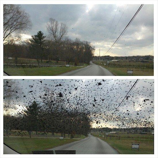 birds above car