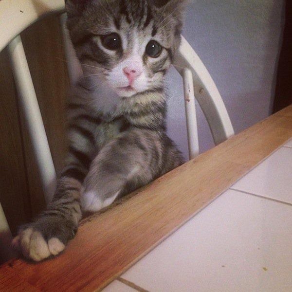 bum-kitten-sad