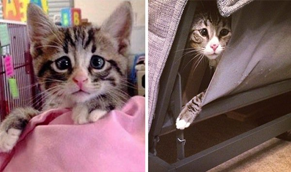 bum-kitten-two