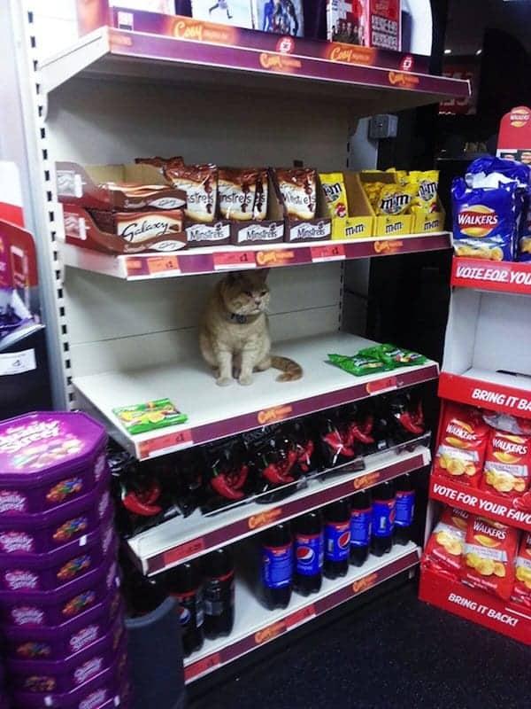 cat-shop