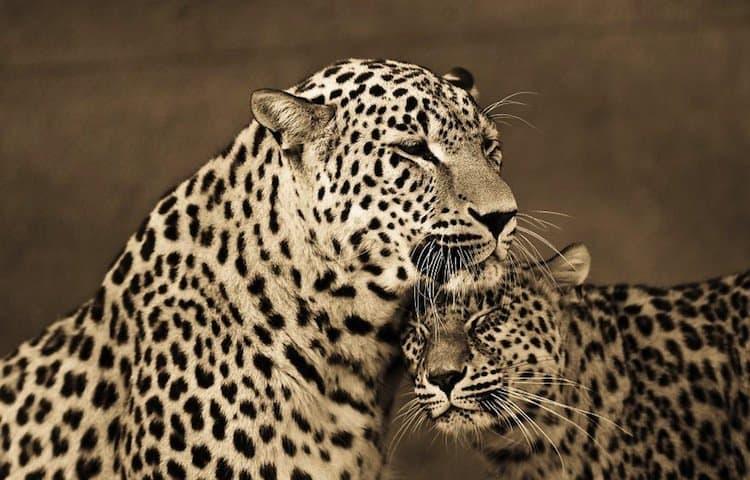 cat-spots