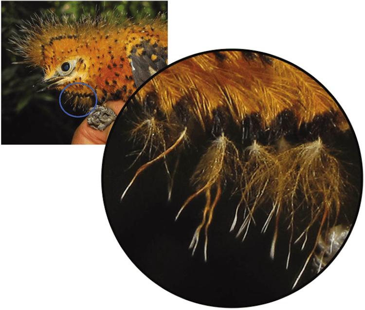 caterpillar-barbs