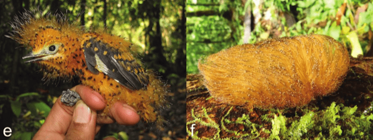 caterpillar-birds