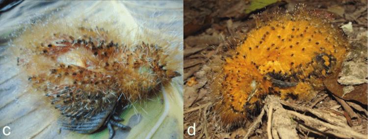 caterpillar-poison