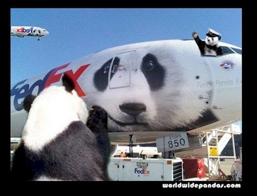 china-pandas