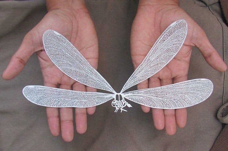 cut-dragonfly
