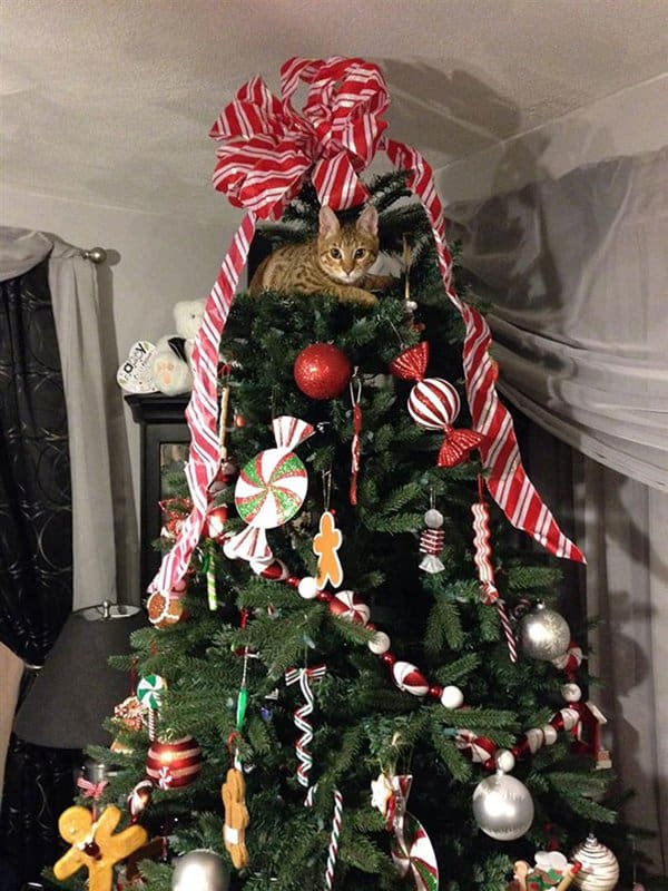 13 Cats Helping To Decorate Christmas Trees Part 2