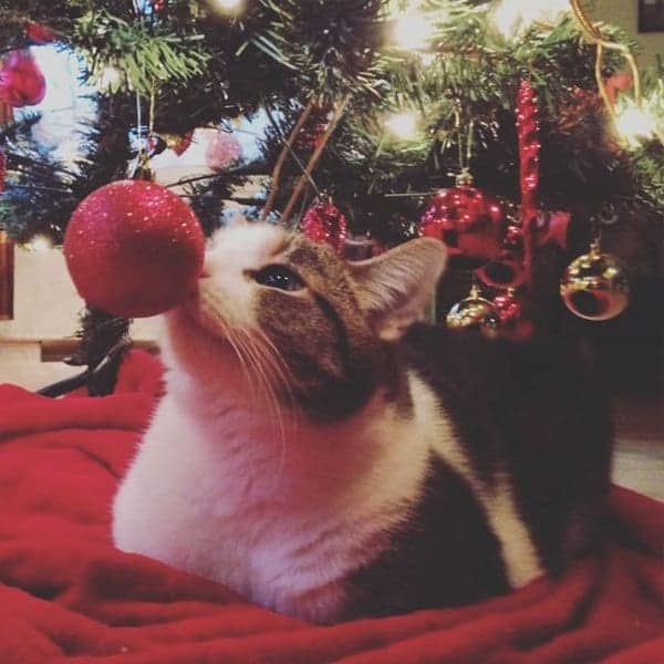 Why Do We Have Christmas Trees For Christmas: 14 Cats 'Helping' To Decorate Christmas Trees