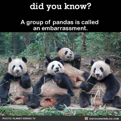 What You Should Know About PANDAS, a Serious Condition Associated With Strep Infections in Children