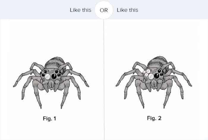 dog-spider