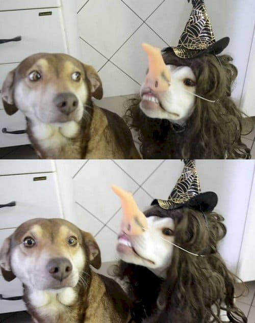 dogs costume