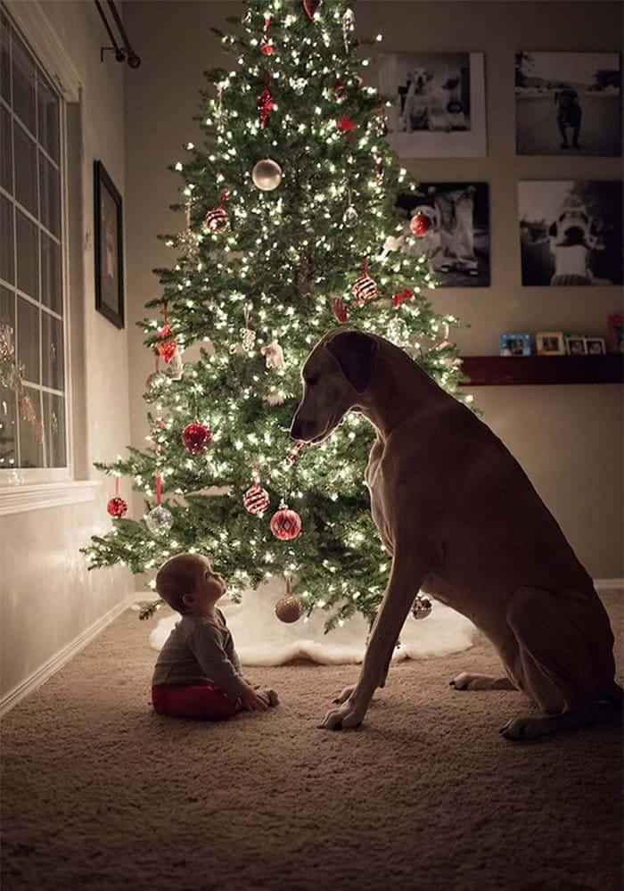 every-kids-need-pets-baby
