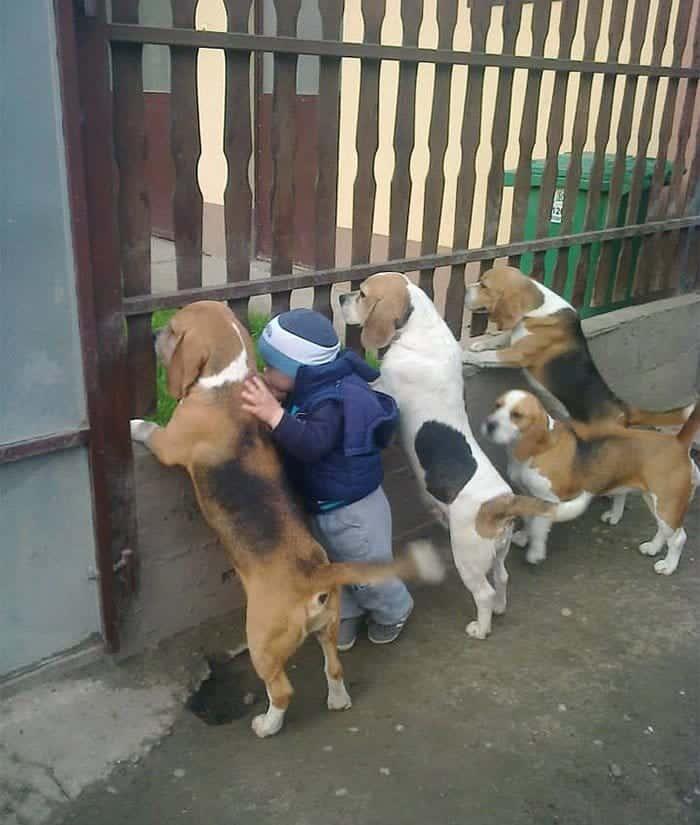 every-kids-need-pets-beagles