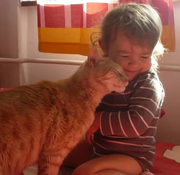 every-kids-need-pets-cat