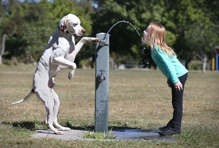 every-kids-need-pets-fountain