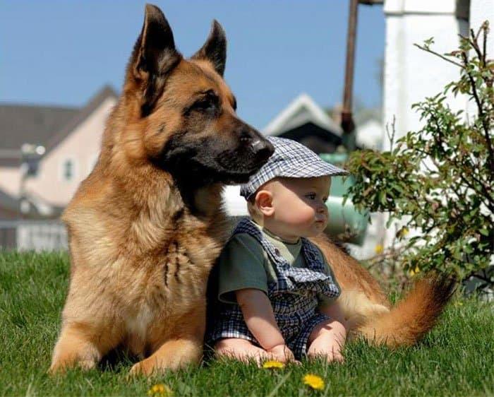 every-kids-need-pets-garden