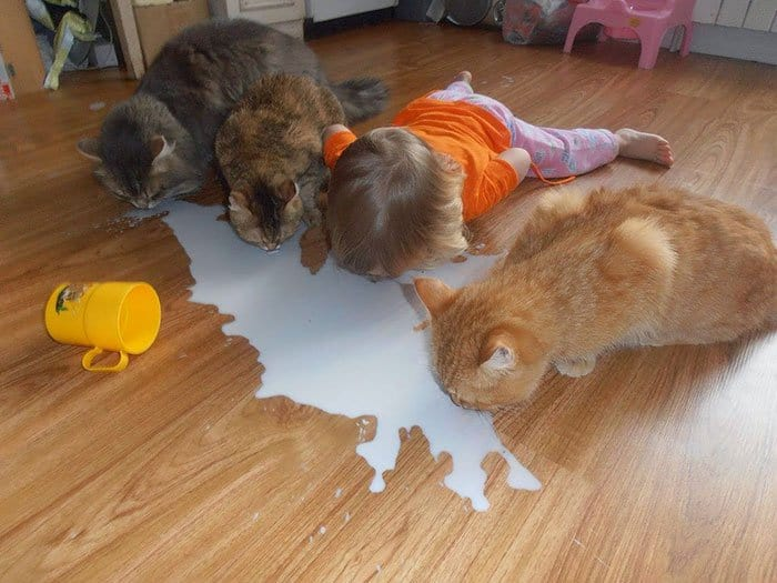 every-kids-need-pets-milk