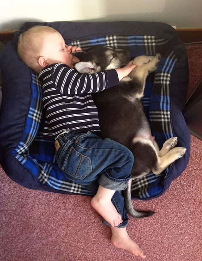 every-kids-need-pets-nap
