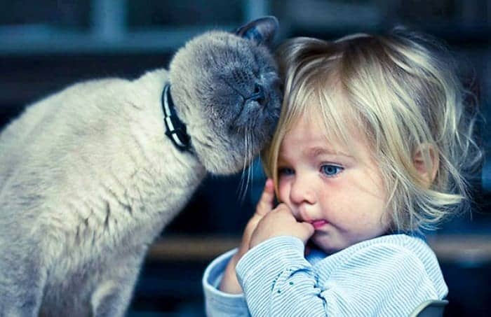 every-kids-need-pets-purr