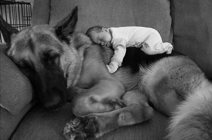 every-kids-need-pets-shepherd