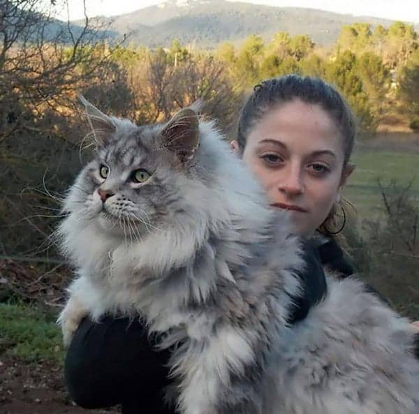 fluffy-cats-huge