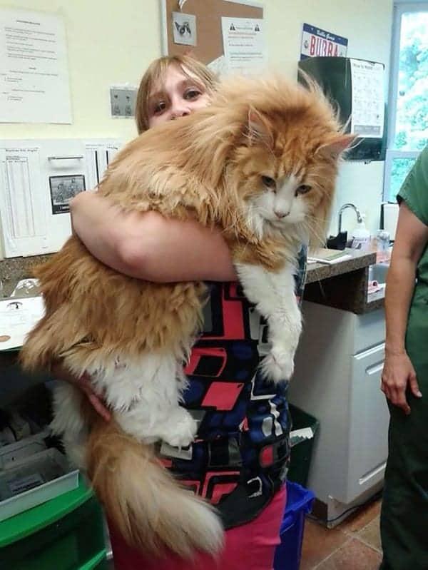 fluffy-cats-lift