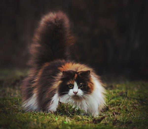 fluffy-cats-moss