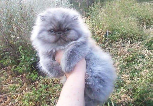 fluffy-cats-smush