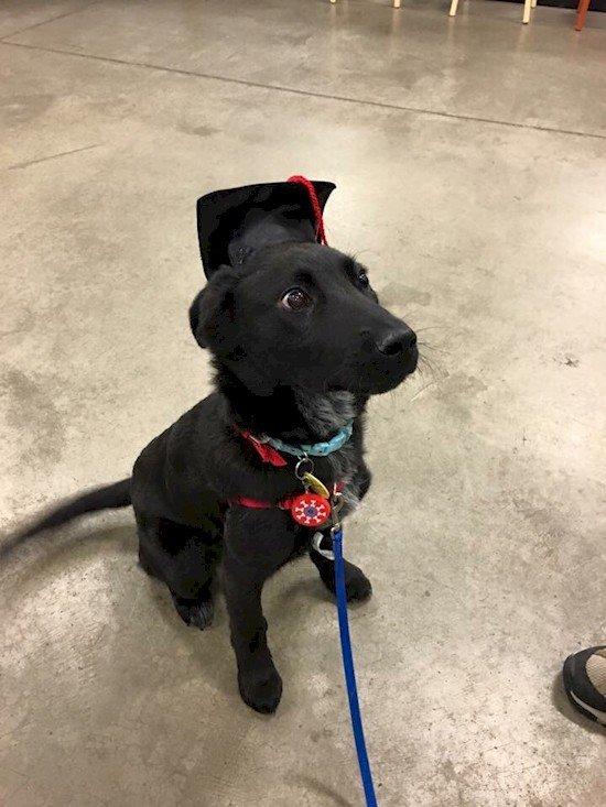 graduating dog
