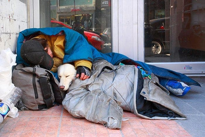 homeless-dogs-unconditional-love-dog