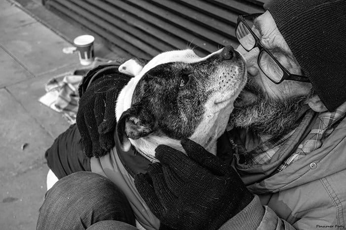 homeless-dogs-unconditional-love-glasses