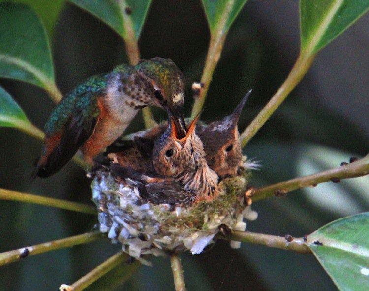 humming-eat