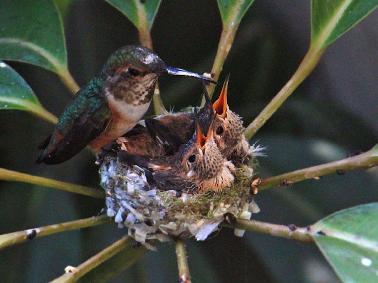 humming-mama
