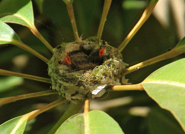 humming-orange