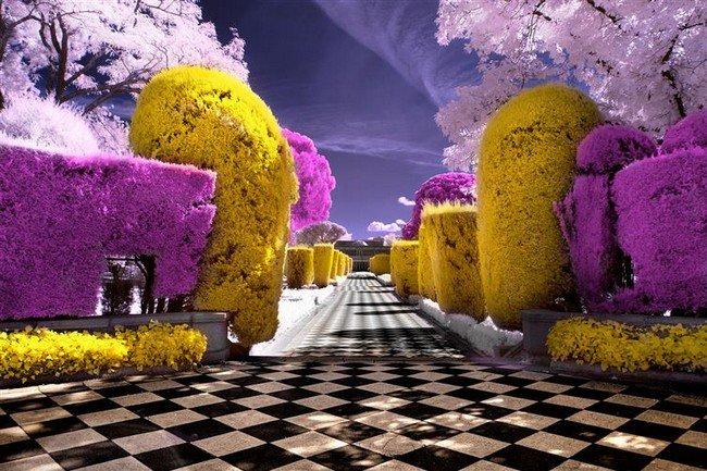 infrared garden