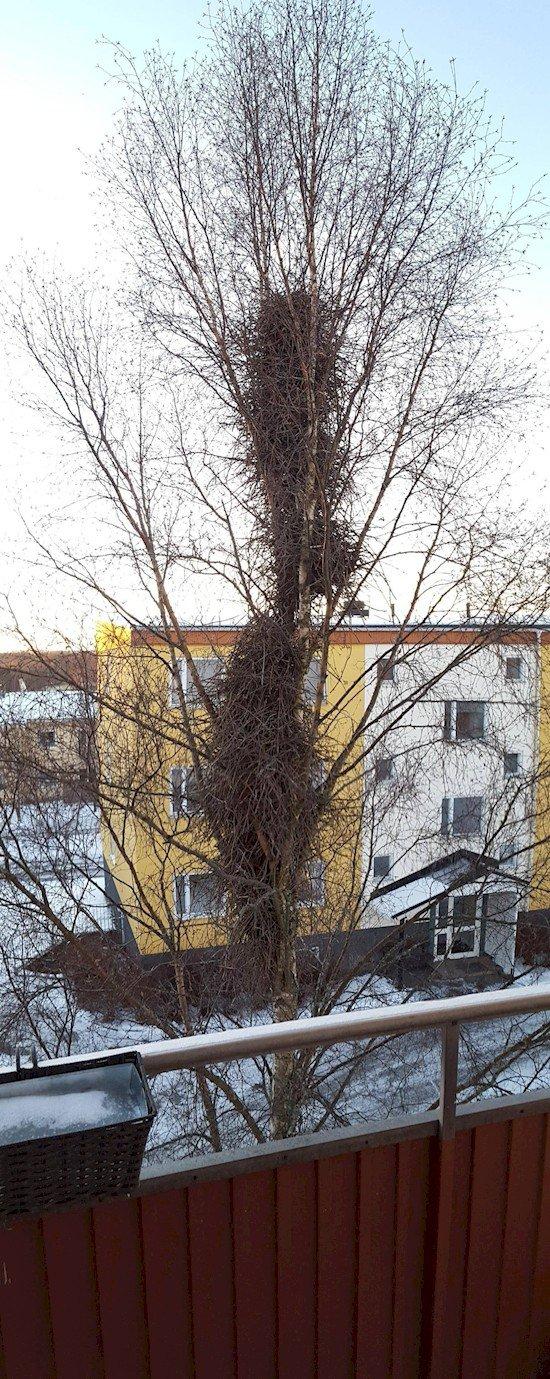 large system birds nests