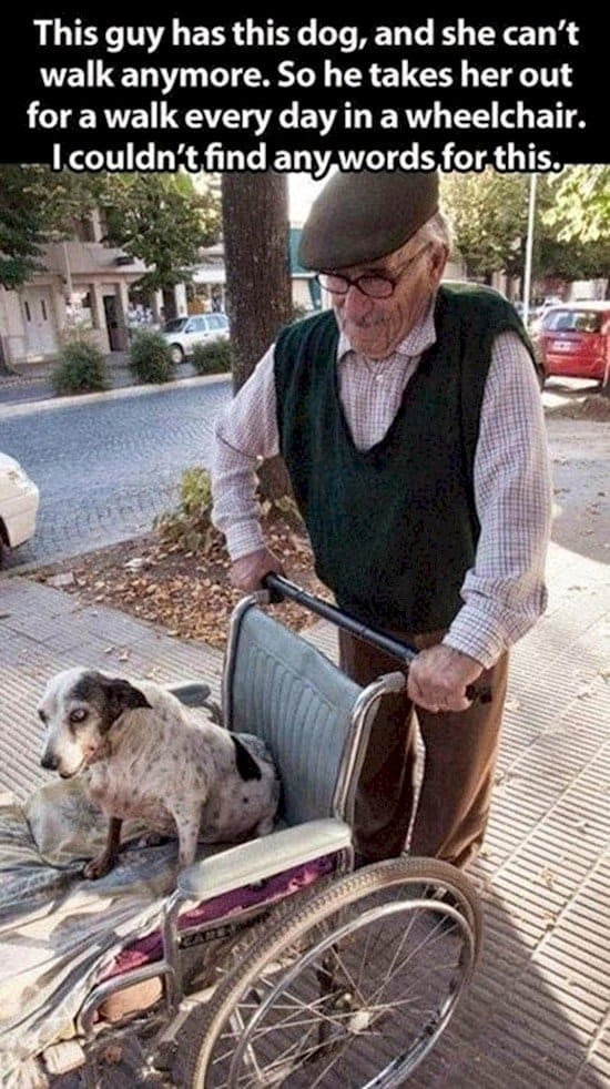 man dog wheelchair