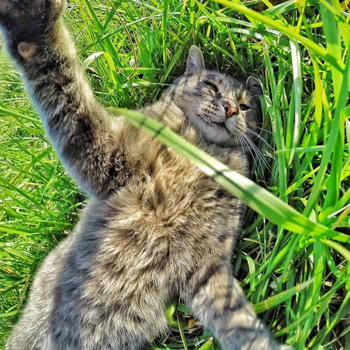 manny-cat-takes-selfies-grass